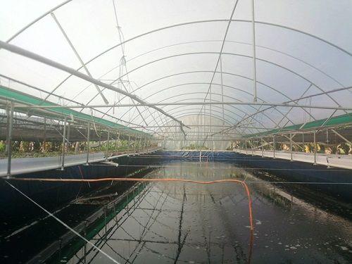 廣東東莞市4家單位獲現代漁業發展獎勵金超90萬